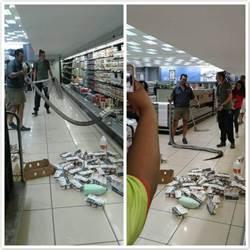 「別吵!我在冬眠」 南非超市冷藏區驚見巨蟒