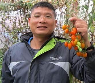 滇緬後裔第三代 馬正忠致力有機農業