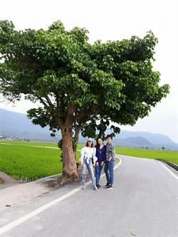 金城武樹有伴了!蔡依林樹待遊客尋訪