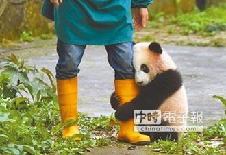 陸將建熊貓國家公園 3/4台灣大