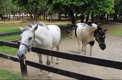 經營動物展演業要申領執照 違者最高罰15萬