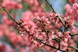攝影一解》絕美櫻花怎麼拍?
