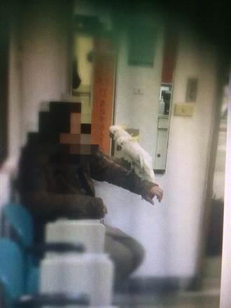 愛鳥意外遭竊 警循監視器逮街友