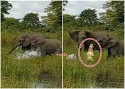 太不識「象」! 鱷魚攻擊小象反被擊退