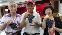 彰化永靖農會早春葡萄評鑑 71歲老農江榮章奪冠