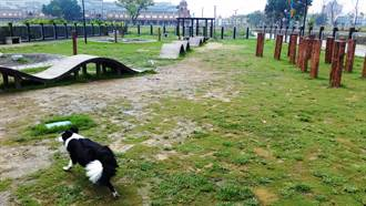 中市府整修寵物公園 保留草地移除不必要設施