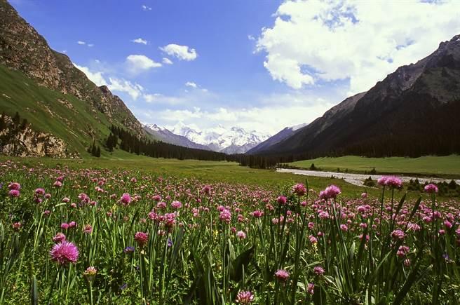 春天遊北疆,處處看得到遍地野花怒放。(鵬程旅行社提供)