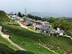 傻勁發威 三十甲茶農跟著樟湖國中小走生態農法