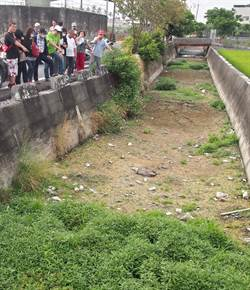 屏東流屎河問題嚴重 縣府提「光電離牧」、「畜牧專區」