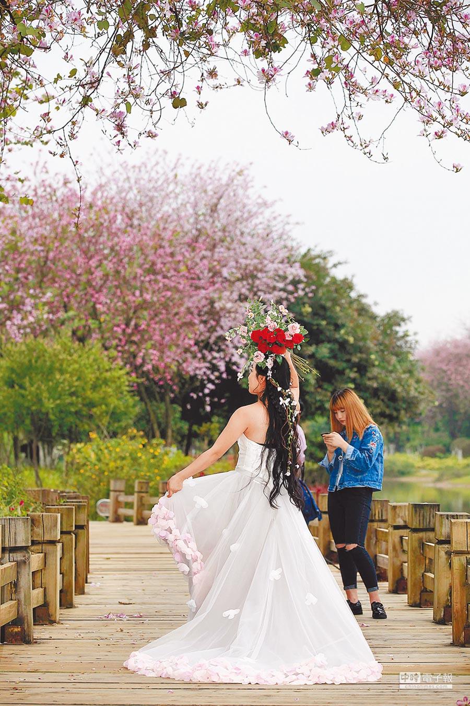 柳州市河東公園,女孩在紫荊花下拍攝藝術照。(張存立攝)