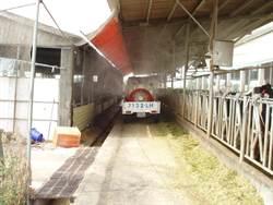 嘉義53頭乳牛感染結核病 難釐清感染時間點