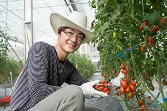 中市青農讓小番茄聽音樂 汁多味甜!