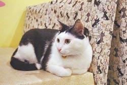 中途之家-野喵中途咖啡 幫200流浪貓找家