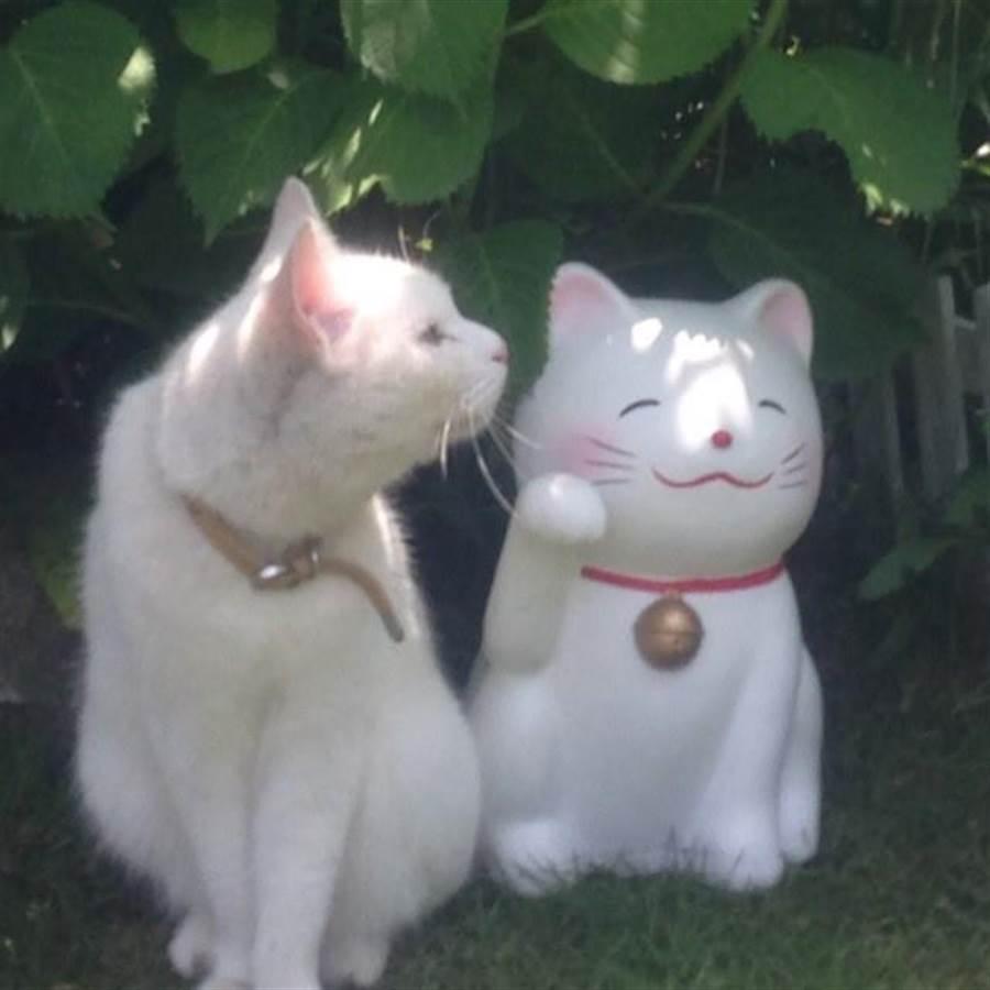 Yuki會跟好友狗狗一同找客人玩耍。(樂天旅遊提供)