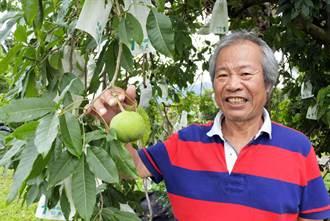 林清池種新興果樹「白柿」 5月搶鮮上市
