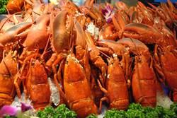 霸氣!大八「海洋美食節」 波士頓龍蝦吃到飽