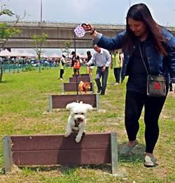 高屏溪岸寵物公園啟用 毛小孩好開心