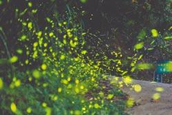 螢經濟-螢火蟲 照亮觀光商機