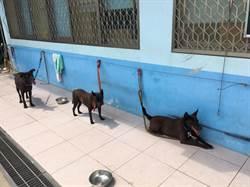 幫流浪犬找工作 台南狗狗跟著社區志工去巡邏