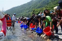 大甲溪河川復育 10年放流71萬尾魚苗