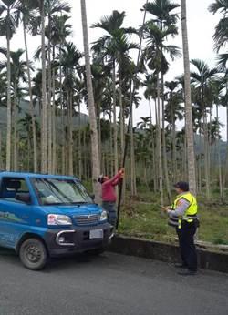 花蓮農產價格暴漲 警方加強巡邏防竊
