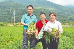 懶惰農夫 種出唯一產銷履歷韭菜