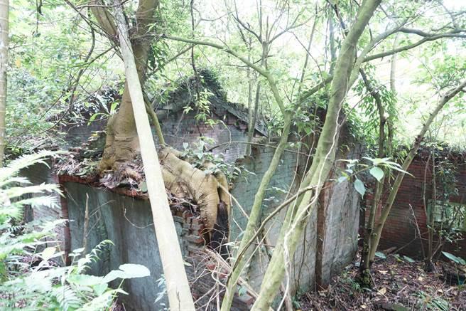 桃園市客家事務局4日勘查龍潭通往新竹關西的八寮古道,將來將對其修復,希望打造深度在地旅遊。(圖/賴佑維)