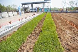 陸海水稻新技術 多養活8000萬人