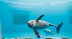 江豚保育升級 陸列一級保護動物