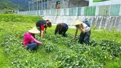 當農場幫手 台東米國學校送碗公飯