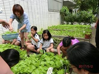 食農教育從小扎根 四維國小學童種菜包水餃