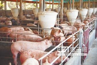 《生活實驗室》北部養豬漸少 何不蓋生質能廠