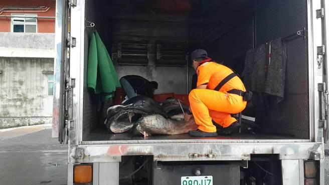 環團呼籲應加速將巨口鯊列入禁捕名單。(許家寧翻攝)