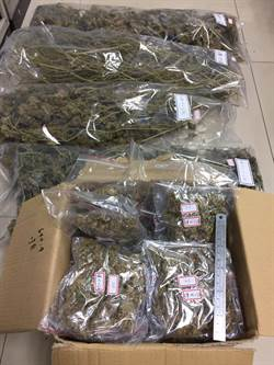 宮廟正對面種大麻 疑將販毒牟利轉投餐飲