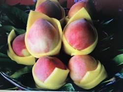 中埔水蜜桃 開賣了