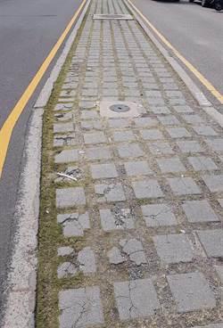 烏日高鐵區怪象 道路分隔綠帶是公園用地