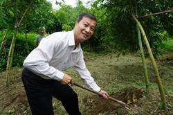 潭子農會直送綠竹筍 駝背矮肥為上品