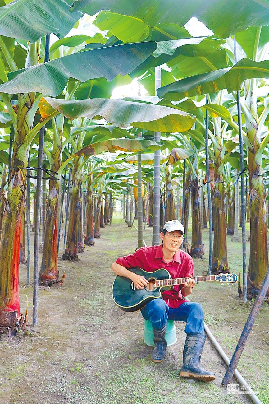 新埤蕉農葉志雄(見圖,謝佳潾攝)10年前放棄錄音師工作返鄉種香蕉,種出全台首張香蕉全球認證證書的他,近期擔憂小農生活會遭政府籌組的台農發公司破壞,他強調政府不應干涉經濟作物市場機制,而是協助蕉農整合。