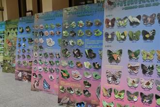 千種生態攝影圖縣府中廊讓您大開眼界