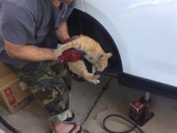 貓咪卡車內 警急叩修車業幫忙