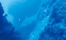 萬里桐海域 潛水客驚見鯊魚