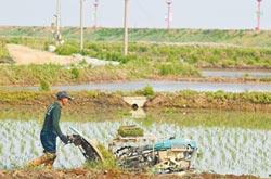 解決糧食不足 陸全球收購耕地