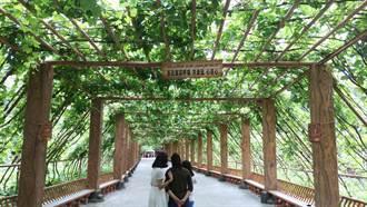 吐魯番寶地 多樣風貌讓人驚嘆