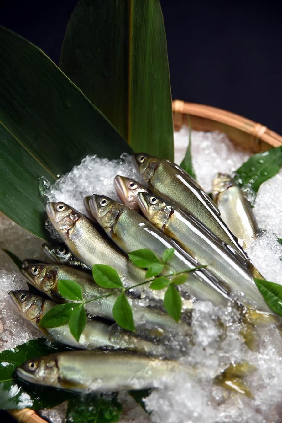 除了星期天外,〈子元〉天天都採購「搭飛機」來台的日本新鮮食材,圖為小香魚。(圖/姚舜攝)