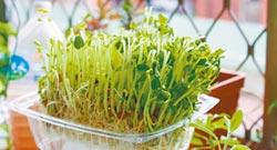 養肝滋補 綠豆芽能清燥熱
