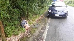 婦人醉臥路邊 露出白大腿引警關懷