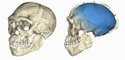 摩洛哥新發現智人化石 顛覆人類源自東非說