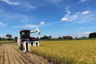台南16號如越光米 小農、學校收成豐富