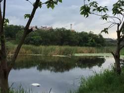 樹林鹿角溪發現浮屍 家屬指認為72歲失蹤翁