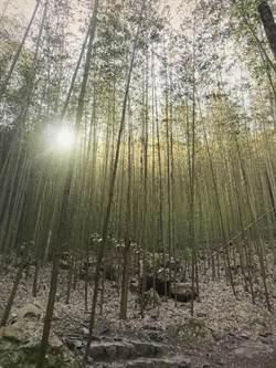 八仙山森林魔法體驗營 19日受理報名